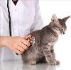 Ветеринарные клиники в Любиме